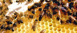 Debugging insect dynamics